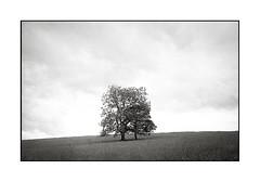 img591 (mostly mono and some colour) Tags: leicaiii tmax400 blackandwhite trees
