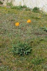 Farnham St Andrews Churchyard-G9181974 (tony.rummery) Tags: em10 farnham graveyard mft microfourthirds omd olympus orangeflower standrews surrey england unitedkingdom