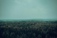 autumn vibes (Sami_Kontiainen) Tags: autumn suomi finland rain mist fog nikon d7500 forest