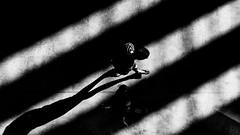 Stripes (Sean Batten) Tags: london england unitedkingdom tatemodern blackandwhite bw light shadow diagonals city urban fuji fujifilm x100f people