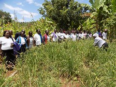 Kenya Tigania - Farmer field day of learning (Growing Hope Globally) Tags: growing hope globally world renew ads mt kenya east humanitarian charity food security farmers men women children families drough drip irrigation mulching income tomatoes kale conservation agriculture