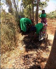 Kenya Tigania - Community tree nursery (Growing Hope Globally) Tags: growing hope globally world renew ads mt kenya east humanitarian charity food security farmers men women children families drough drip irrigation mulching income tomatoes kale conservation agriculture
