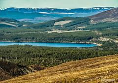 "Forests of the Spey Valley and Loch Morlich in the Cairngorms National Park. (Scotland by NJC.) Tags: forest woodland plantation trees grove ""temperate rainforest"" غَابَة floresta 森林 šuma les skov bos ""bosque grande"" metsä forêt wald δάσοσ foresta skog las pădure mountains hills highlands peaks fells massif pinnacle ben munro heights جَبَلٌ montanha 山 planina hora bjerg berg montaña vuori lakes lochs reservoirs waters meres tarns ponds pool lagoon lago 湖 jezero sø meer järvi lac see λίμνη 호수 innsjø cairngormnationalpark scotland lochmorlich"