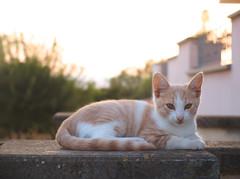 6553 - Luke (Diego Rosato) Tags: luke gatto cat animal animale pet gattino kitten stray randagio giardino garden tramonto sunset controluce backlight fuji x30 rawtherapee