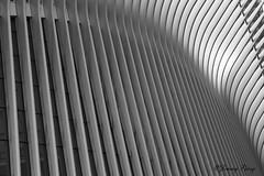 55 Points (Jimmy Joe P) Tags: 911 bw metropolitan metro nyc downtown city subway blackandwhite texture manhattan oculus transportation worldtradecenter newyorkcity wtc