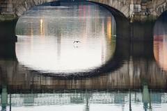 Dublin morning (romeheather) Tags: bird bridge abstract dublin ireland