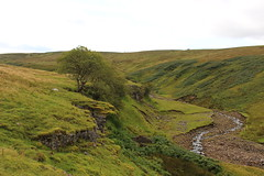 clint crags (kokoschka's doll) Tags: crag burn ireshope tree valley weardale pennines