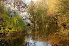 DSC02986 (Argstatter) Tags: frühling landschaft landscape stimmungen natur baum spiegelung