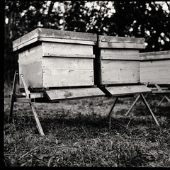 Deux ruches (Two hives) (micge) Tags: ruche abeilles 6x6 moyen format carre square noir blanc hive bee black white bw hassemblad
