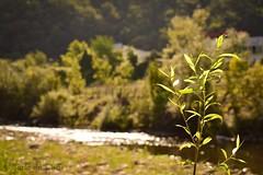 🌿 (carla19394) Tags: shimer brillo water agua flowers flores river rio nature naturaleza fotografia asturiasparaísonatural asturias