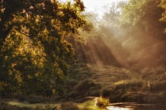Late evening sun rays through the trees! (Nina_Ali) Tags: sunrays landscape lateeveningsunshine leicester trees backlit backlight tranquility calmness nature outdoors light autumnal ninaali