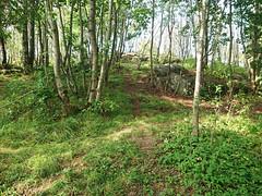 DSC_1602-1 (mtbboy1993) Tags: rawtherapee sonycameraapp grass askim indreøstfold østfold norge norway sunny barerock dropp drop skog forest askimmuseum trees