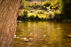 🌿 (carla19394) Tags: nature naturaleza bokeh green verde asturias rivera river rio shimmer brillo spider araña spiderweb teladearaña