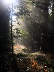 Photo of Sunlight in trees