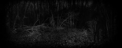 unexpected presence (the ripped bystander) Tags: blackwhite forest darkness night male