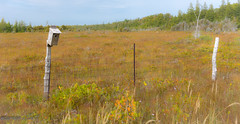 Season Change (maureen.elliott) Tags: happyfencefriday hff fence fenceposts birdhouse rural brucecounty naturereserve landscape