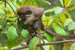 SALTA   ---   JUMPS     -----     EXPLORE (Ezio Donati is ) Tags: animali animals foresta forest fiume river alberi trees natura nature westafrica costadavorio areasanpedro fiumelanero