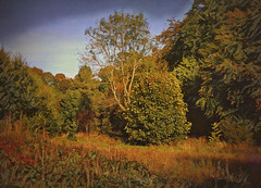 Shades of Autumn (Rollingstone1) Tags: ballochcountrypark scotland autumn vivaldi trees grass leves vivid colour landscape scene nature seasons outdoor art artwork