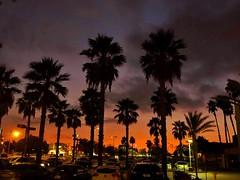 September sundown (Karol Franks) Tags: walking palmtrees utatatw700 california socal pasadena september summer sunset