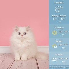 Vrijdag 20 september 2019 (gill4kleuren - 19 ml views) Tags: uss poes chat mieze katje gato gata gatto cat pet animal kitty kat pussycat poezen weather kiity cloudy storm wind rain forcast humidity visibility dog colors yoga bad sky reading book