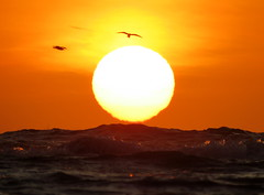IMG_0029x (gzammarchi) Tags: italia paesaggio natura mare ravenna lidodidante alba sole animale uccello volo poesia haiku explore