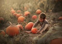 golden Autumn (agirygula) Tags: pumpkin pumpkinfield halloween autum autumtime goldenautum herbst herbstzeit kürbis kürbisfeld fineart vintage vintagelove nature natural light mother earth