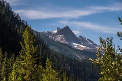 Peaks in Yoho NP (MIKOFOX ⌘) Tags: canada treeline snow summer mountain alpine xt2 forest peaks learnfromexif july landscape provia fujifilmxt2 mikofox showyourexif britishcolumbia xf18135mmf3556rlmoiswr