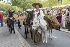 Féria des vendanges 2019 (Xtian du Gard) Tags: xtiandugard nîmes provence occitanie vendanges traditions féria fiesta fête folklore