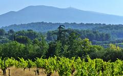 vignes et Mont Ventoux du côté de Caromb... Reynald ARTAUD (Reynald ARTAUD) Tags: 2019 fin août occitanie provence caromb mont ventoux vignes reynald artaud