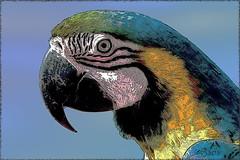 6419_Blue-and-yellow Macaw artistic (SØS'Art) Tags: birds blågularablueandyellowmacawaraararauna digitalartwork art kunstnerisk manipulation solveigøsterøschrøder artistic drawing fugle mallorca natur nature painting papegøjer parrots photomanipulation