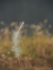 Standing Up (bloomandshine777) Tags: nature photography mft olympus14150mmf456 plants plant flowers flower olympusomdem5markii stan7kon mirrorless omd olympusphotography olympus