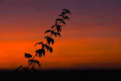 Sunset ~ 2789 (@Wrightbesideyou) Tags: 07904610415 wrightbesideyou blyton d750 england europe lincolnshire nikon nikond750 scarboroughroad sky sunset wrightbesideyouphotography simonwrightbesideyoucom wwwwrightbesideyoucom