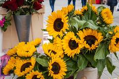 IMG_2327 (Adrian Royle) Tags: finland kuopio travel holiday market city urban food flowers sunflowers