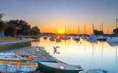 Sunrise Shake (nicklucas2) Tags: seascape christchurch quay river stour water boat yacht dinghy swan duck bird sunrise dorset