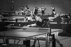 tennis de table - 4 (daviddreuxphotocrea) Tags: monochrome white black blanc noir portrait tennisdetable tabletennis player concentration raquette pingpong bw