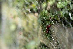 Wire Fence Friday (jillyspoon) Tags: hff fencefriday happyfencefriday