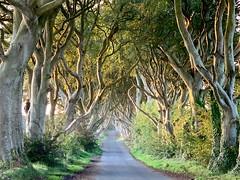 "The Dark Hedges at sunrise (baldychops) Tags: iphone visitor visit iconic icon ""gameofthrones"" autumn outdoor nature stunning beautiful amazing sunshine sun sunrise morning ""northernireland"" ireland ""beechtrees"" ""beechtree"" beech ""thedarkhedges"" tree trees ""darkhedges"""