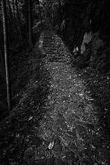 Old road (HarQ Photography) Tags: panasonic lumix s1r s24105mmf4 landscape nara japan oldroad