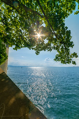A sunny day at the sea ☀️ (Martin Bärtges) Tags: sommer summer blau himmel sky blue naturliebhaber naturfotografie natur baum wasser water plants leaves tree sunny nikonphotography nikonfotografie d4 nikon deutschland germany outdoor drausen sonne sonnenschein sunshine sun bodensee see sea landscape landscapelovers landscapephotography landschaftsfotografie landschaften