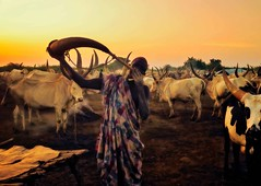 Mundari Tribe (Rod Waddington) Tags: africa african afrique afrika south sudan mundari traditional tribe tribal culture cultural candid cattle camp ethnic ethnicity herd group horn pbere sunset