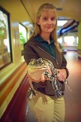 Meet an Alligator (MTSOfan) Tags: za zooamerica alligator americanalligator reptile education staff woman