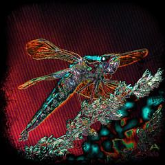 KV4A6872 Dragonfly fantasy (SØS'Art) Tags: colorful digiart digitalartwork art kunstnerisk manipulation solveigøsterøschrøder artistic dragonfly drawing guldsmed insects insekter painting photomanipulation