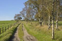 GunHillTrack (Tony Tooth) Tags: nikon d7100 nikkor 40mm countryside track farmtrack road gunhill birch birchtrees farming farmland meerbrook staffs staffordshire staffordshiremoorlands england