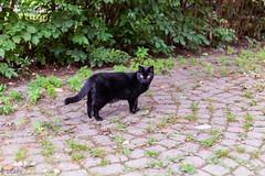 Black cat 🐈 (Uta_kv) Tags: beautifulcat blackcat canon50mmf18 goldenhour parkdale flowers magichour flower canoneos canon5dclassic sunrise photography canon5d canoncolors