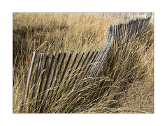 ocean of grass and fence (Armin Fuchs) Tags: arminfuchs nomansland fence grass diagonal niftyfifty anonymousvisitor thomaslistl wolfiwolf jazzinbaggies hff autumn