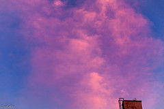 Red 🌌 sky (Uta_kv) Tags: canon50mmf18 goldenhour parkdale flowers magichour flower canoneos canon5dclassic sunrise photography canon5d canoncolors