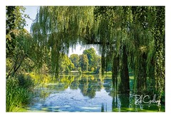 Room with a view (Bob Geilings) Tags: trees green water lake view mood nature flora background summer shadow panorama vegetation plantlife