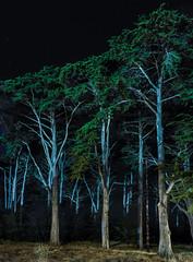 battery godfrey (pbo31) Tags: sanfrancisco california nikon d810 color september 2019 boury pbo31 city night dark black presidio trees nature earth forest bush cypress panorama large stitched panoramic green