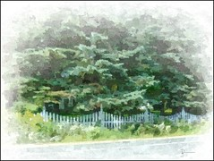 Picket Fence out in the countryside (novice09) Tags: fence happyfencefriday picketfence rural countryside trees artistic painterly ipiccy