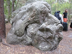 boulder with character (squeezemonkey) Tags: france castlestafftrip fontainebleau texture head boulder rock sandstone